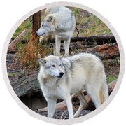 Round Beach Towel featuring the photograph Twin Wolves by Athena Mckinzie