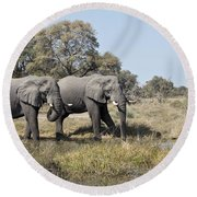 Two Bull African Elephants - Okavango Delta Round Beach Towel by Liz Leyden