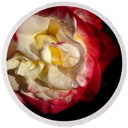 Round Beach Towel featuring the photograph Two Color Rose by David Millenheft