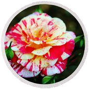 Two Colored Rose Round Beach Towel by Cynthia Guinn