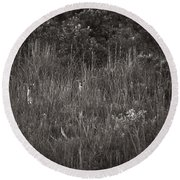 Round Beach Towel featuring the photograph Two Deer Hiding by Bradley R Youngberg