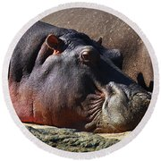 Two Hippos Sleeping On Riverbank Round Beach Towel by Johan Swanepoel