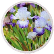 Round Beach Towel featuring the photograph Two Iris by Patricia Babbitt