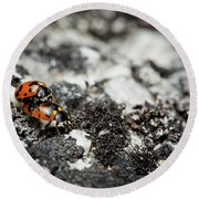 Two Ladybugs Coccinellidae Mating Round Beach Towel