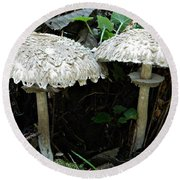 Two Magnificent Toadstools Round Beach Towel