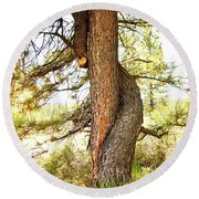 Two Pines Intertwined  Round Beach Towel