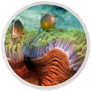 Two Skunk Anemone Fish And Indian Bulb Round Beach Towel