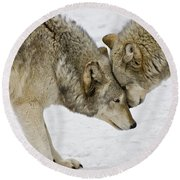 Two Wolves In  A Staredown Round Beach Towel by Gary Slawsky