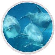 Underwater Dolphin Encounter Round Beach Towel by David Nicholls