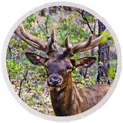 Round Beach Towel featuring the photograph Up Close And Personal With An Elk by Bob and Nadine Johnston
