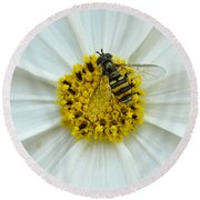 Up Close With The Bee And The Cosmo Round Beach Towel