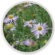 Uplifted Asters Round Beach Towel