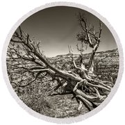 Round Beach Towel featuring the photograph Uprooted - Bryce Canyon Sepia by Tammy Wetzel
