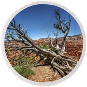 Round Beach Towel featuring the photograph Uprooted - Bryce Canyon by Tammy Wetzel