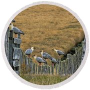 End Of The Road Birds Round Beach Towel