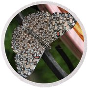 Round Beach Towel featuring the photograph Variable Craker Butterfly #2 by Judy Whitton
