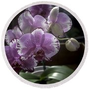 Variegated Fuscia And White Orchid Round Beach Towel by Lynn Palmer