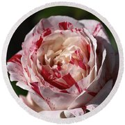 Round Beach Towel featuring the photograph Variegated Rose by Joy Watson