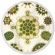 Varities Of Pediastrum From Kunstformen Der Natur Round Beach Towel