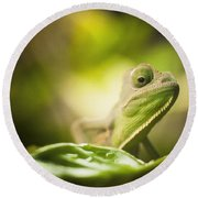 Veiled Chameleon Is Watching You Round Beach Towel