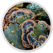 Round Beach Towel featuring the photograph Velvet Wild Mushrooms  by Jerry Cowart