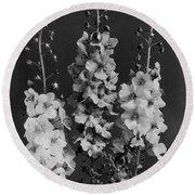 Verbascum Phoeniceum Flowers Round Beach Towel