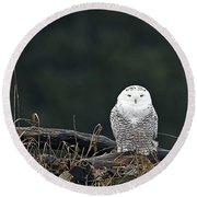 Vermont Snowy Owl Round Beach Towel