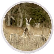 Vigilant White-tailed Deer Round Beach Towel
