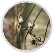 Vine On Rusted Fence Round Beach Towel