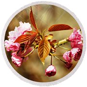 Round Beach Towel featuring the photograph Vintage Cherry Blossoms by Judy Palkimas