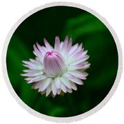 Violet And White Flower Sepals And Bud Round Beach Towel