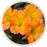 Vireya Rhododendron Round Beach Towel by Venetia Featherstone-Witty