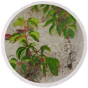 Virginia Creeper At The Beach Round Beach Towel