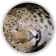 Voodoo The Leopard Round Beach Towel
