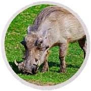Warthog In Addo Elephant Park Near Port Elizabeth-south Africa  Round Beach Towel by Ruth Hager