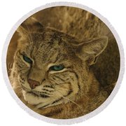 Wary Bobcat Round Beach Towel