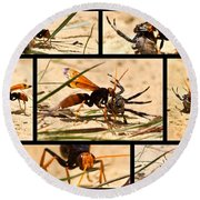 Round Beach Towel featuring the photograph Wasp And His Kill by Miroslava Jurcik