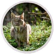Watchful Mama Lynx Round Beach Towel