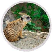 Watchful Meerkat Round Beach Towel by Jon Woodhams