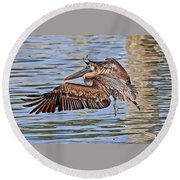 Round Beach Towel featuring the photograph Water Ballet - Brown Pelican by HH Photography of Florida