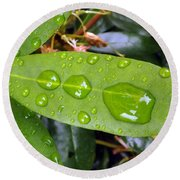 Water Droplets On Leaf Round Beach Towel