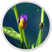 Water Lily 005 Round Beach Towel