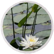 Water Lily In Bloom Round Beach Towel