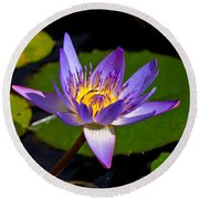 Water Lily  Round Beach Towel by Scott Carruthers