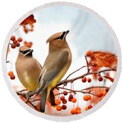 Beautiful Waxwing  Round Beach Towel by Nava Thompson