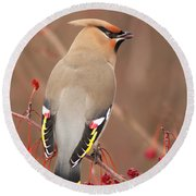 Waxwing In Winter Round Beach Towel by Mircea Costina Photography