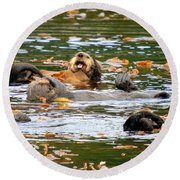 We Otter Be In Pictures Round Beach Towel