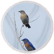 Western Bluebird Pair Round Beach Towel by Mike  Dawson