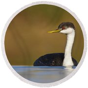 Round Beach Towel featuring the photograph Western Grebe On The Lake by Bryan Keil