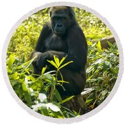 Western Lowland Gorilla Sitting On A Tree Stump Round Beach Towel